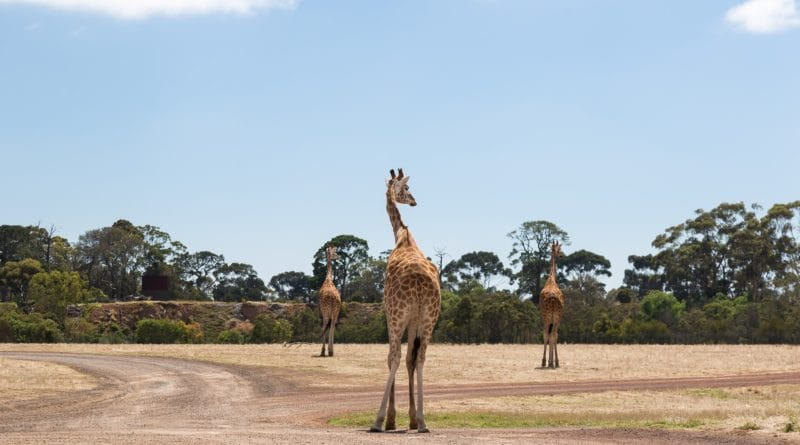Werribee ZOO 2