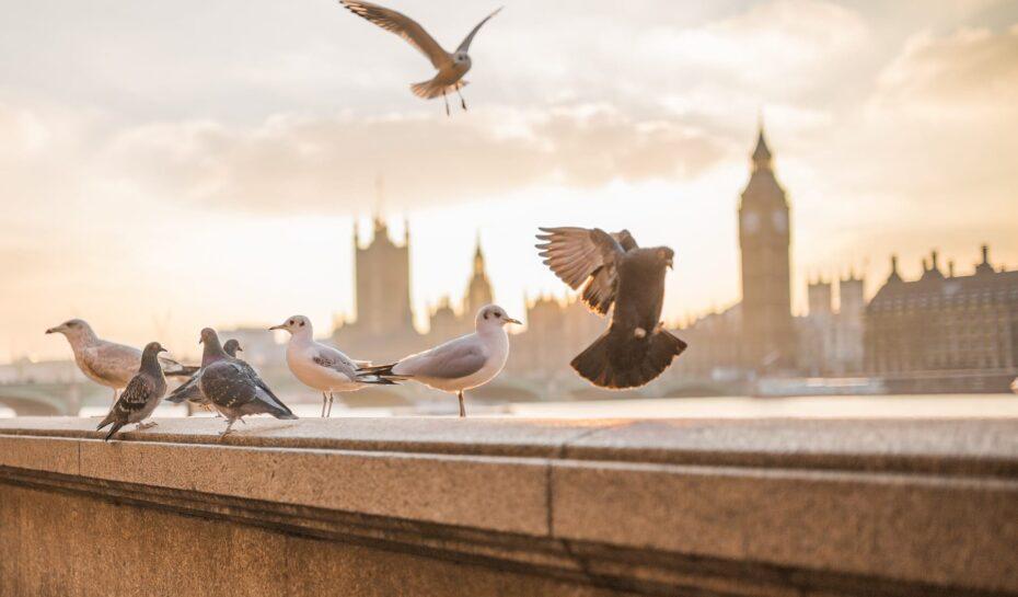 Londýn – co jste o slavném městě na Temži nevěděli