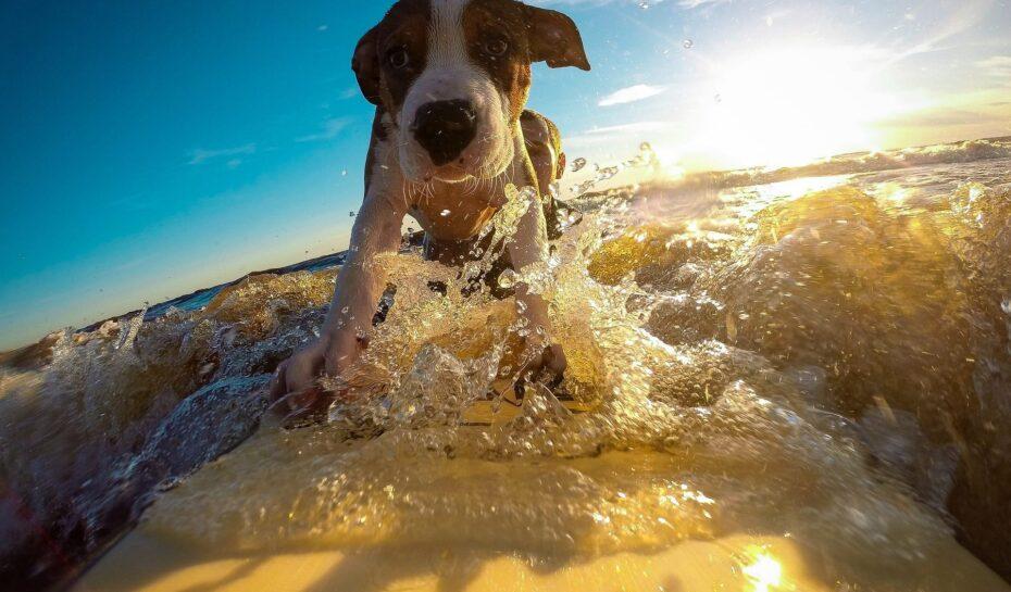 Kam na dovolenou se psem po Evropě?