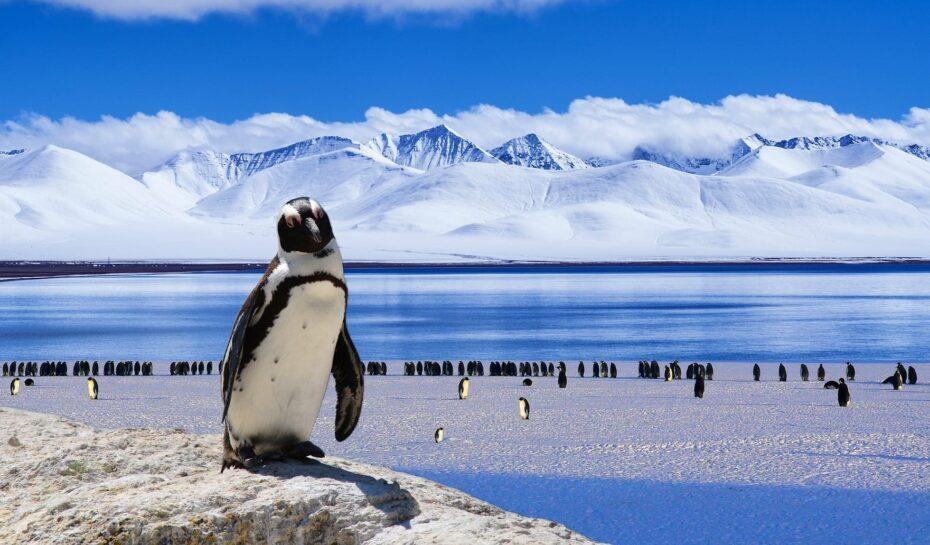 Cesta na ledový kontinent bude zase o něco lehčí