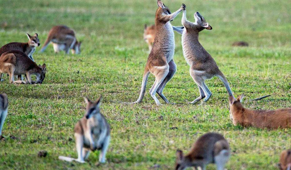 Austrálie zůstane turistům zapovězená až do poloviny roku 2022